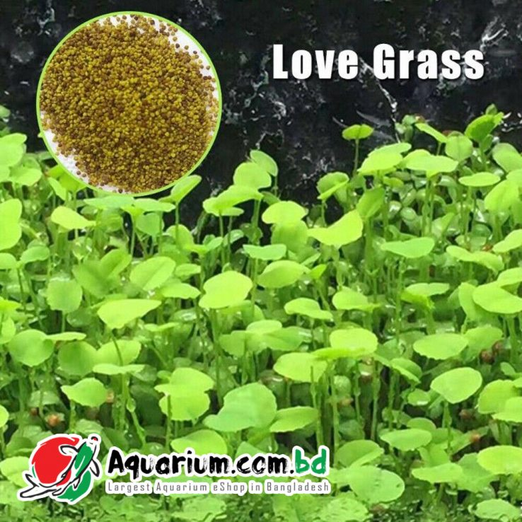 Aquarium Plant Seed- Love Grass