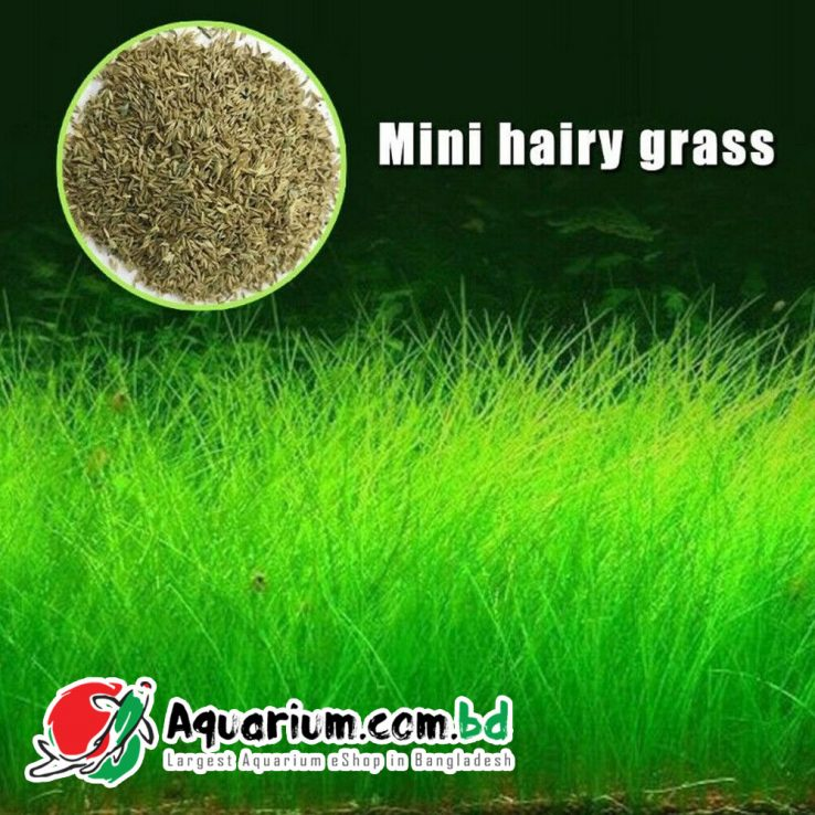 Aquarium Plant Seed- Mini Hairy Grass