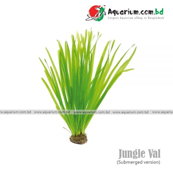 jungle val available in aquarium.com.bd