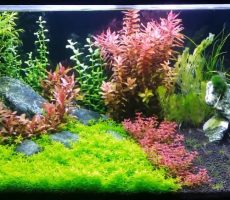 Best_LED_Lights_for_Planted_Tank_Update