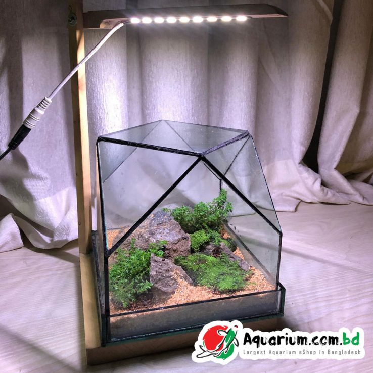 Terrarium-Box-6-inch-Cube-Complete-Setup-with-Light (1)